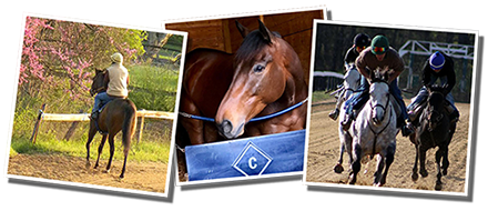Cooney Racing Stables LLC - About Us : Cooney Racing Stables, LLC